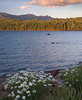 Fly Fishers, Geese, and Daisies, Lake Almanor CA
